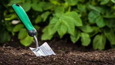 Photo of روش استفاده از ترکیبات مس در کشاورزی | مزایای سولفات مس