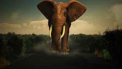 Photo of خمیر دندانی به بزرگی فیل! | از عجایب کاتالیزور پتاسیم یدید